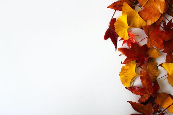 秋 乾燥 髪