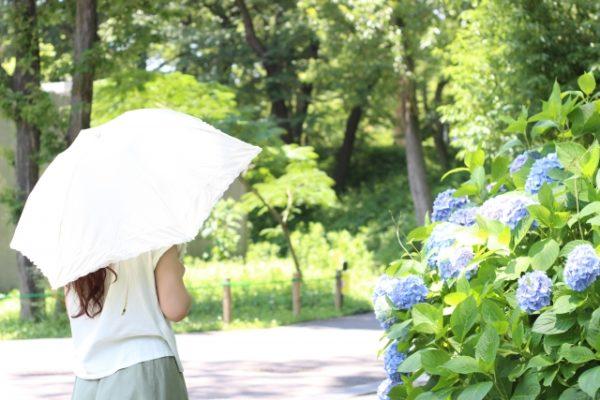 日傘 頭皮 コラーゲン