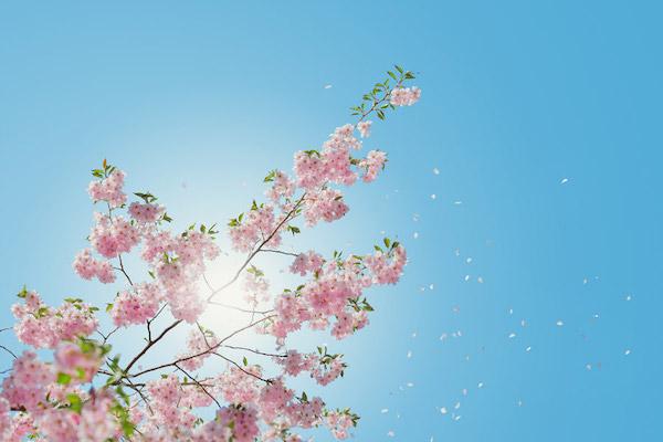 春 紫外線
